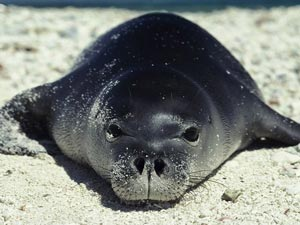 SealWeb